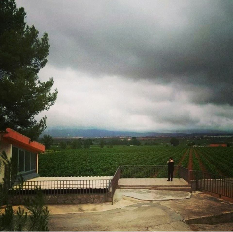 Imagen de algunos viñedos de Utiel-Requena FUENTE: utielrequena.org