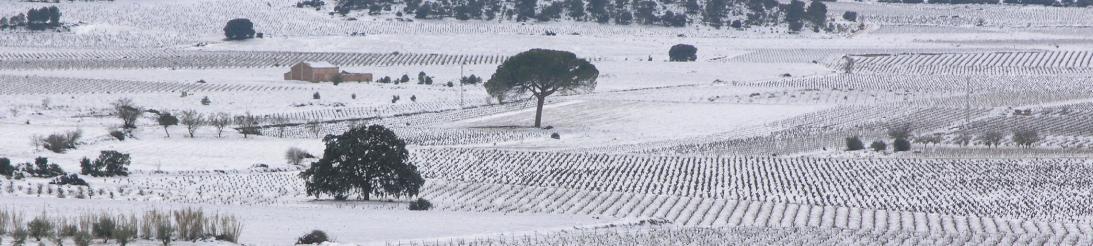 Tierra y clima vinos Utiel Requena