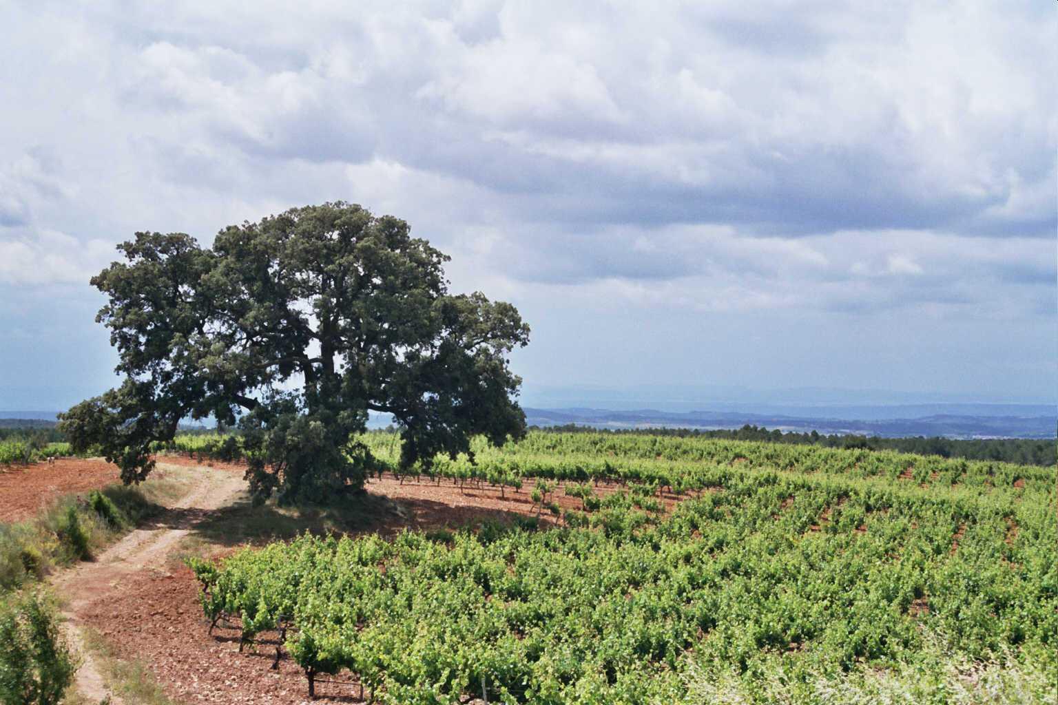 De Bodegas y Viñedos de Utiel a Bodegas Nodus: 10 años en la familia De las  Heras