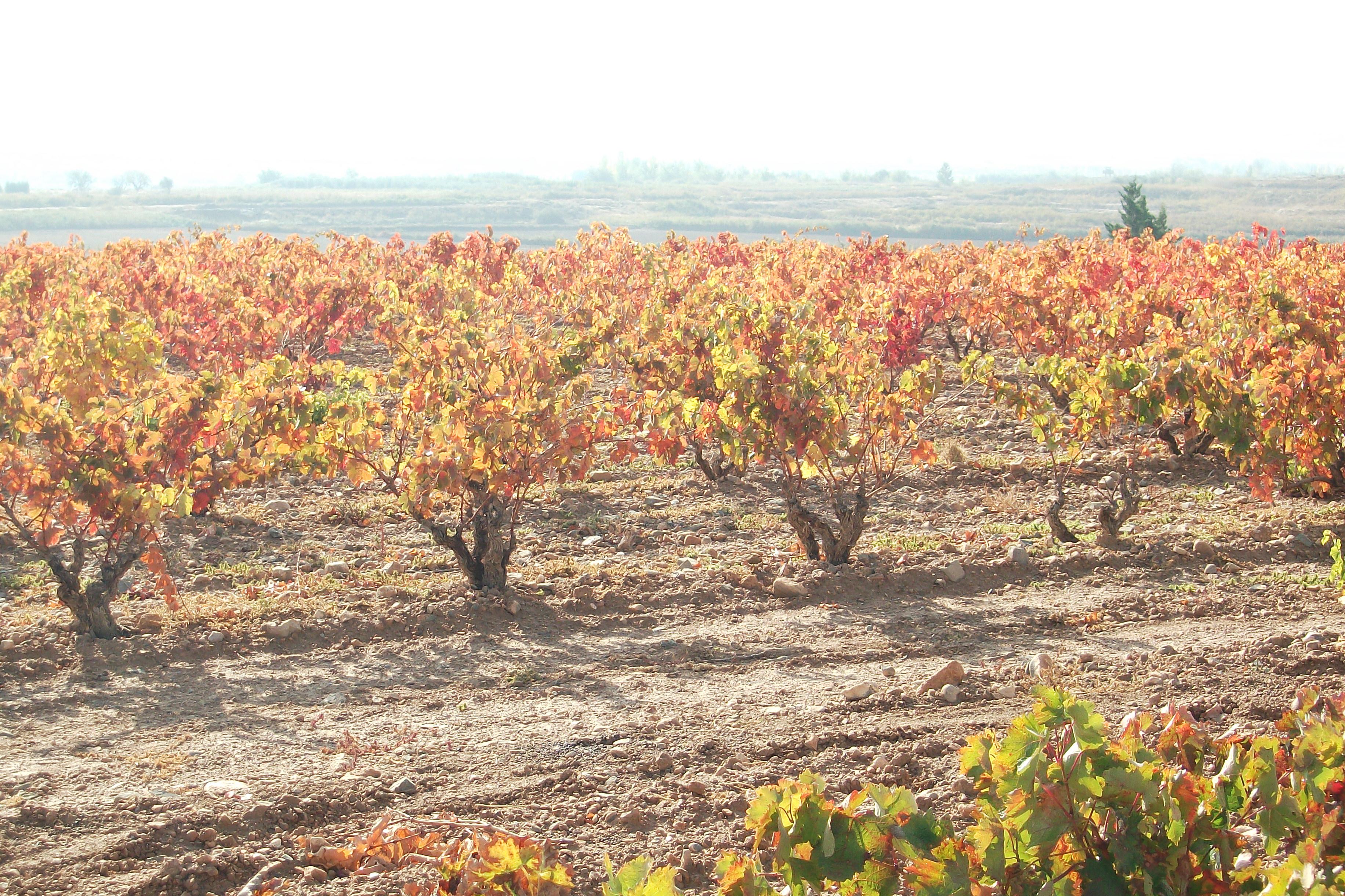 Territorio del vino Navarra