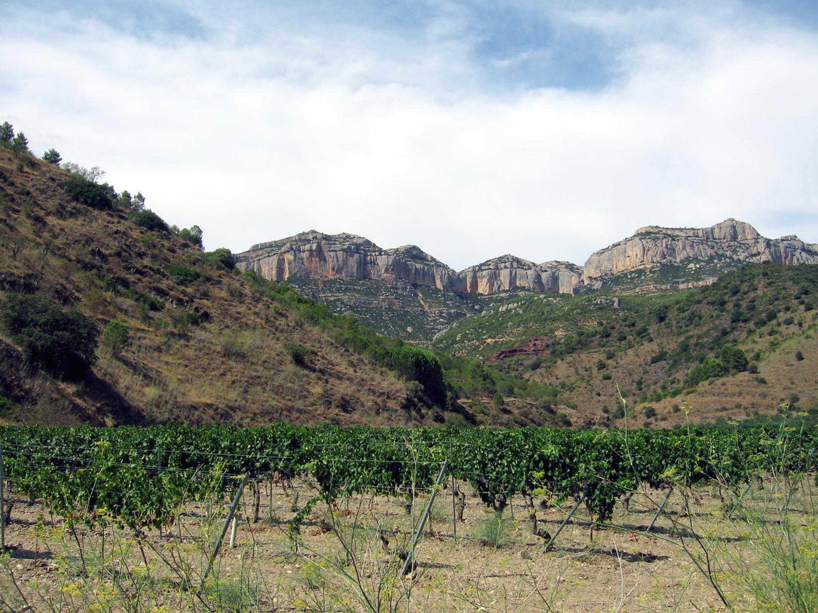Territorio del vino Priorat