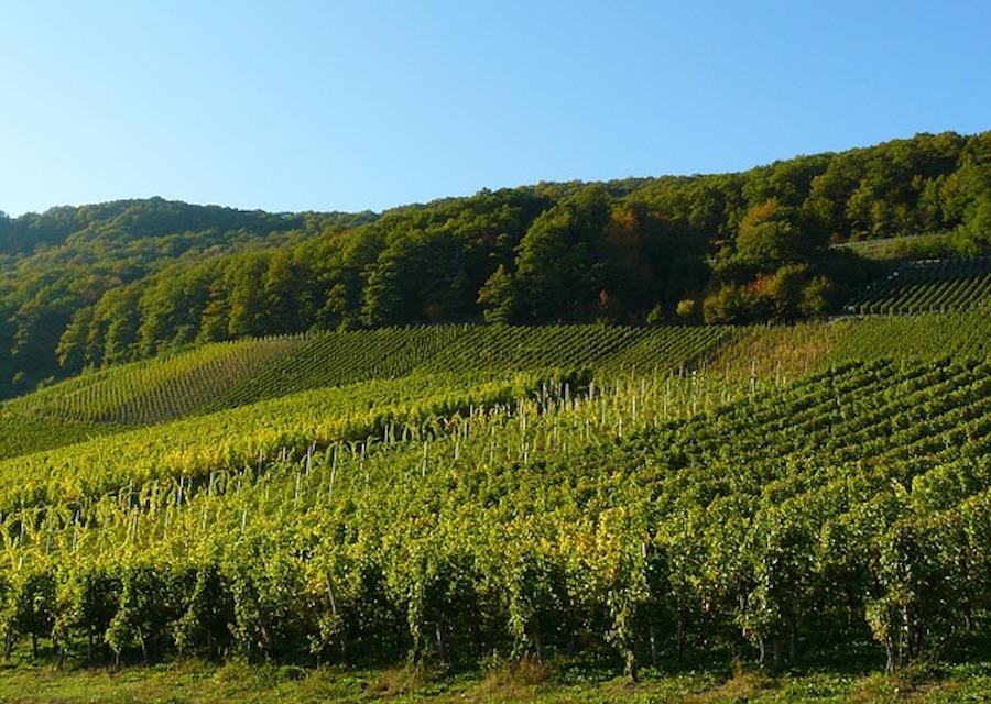 territorio vitivinícola