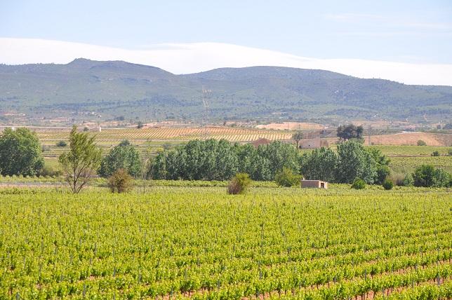 Territorio del vino Utiel-Requena