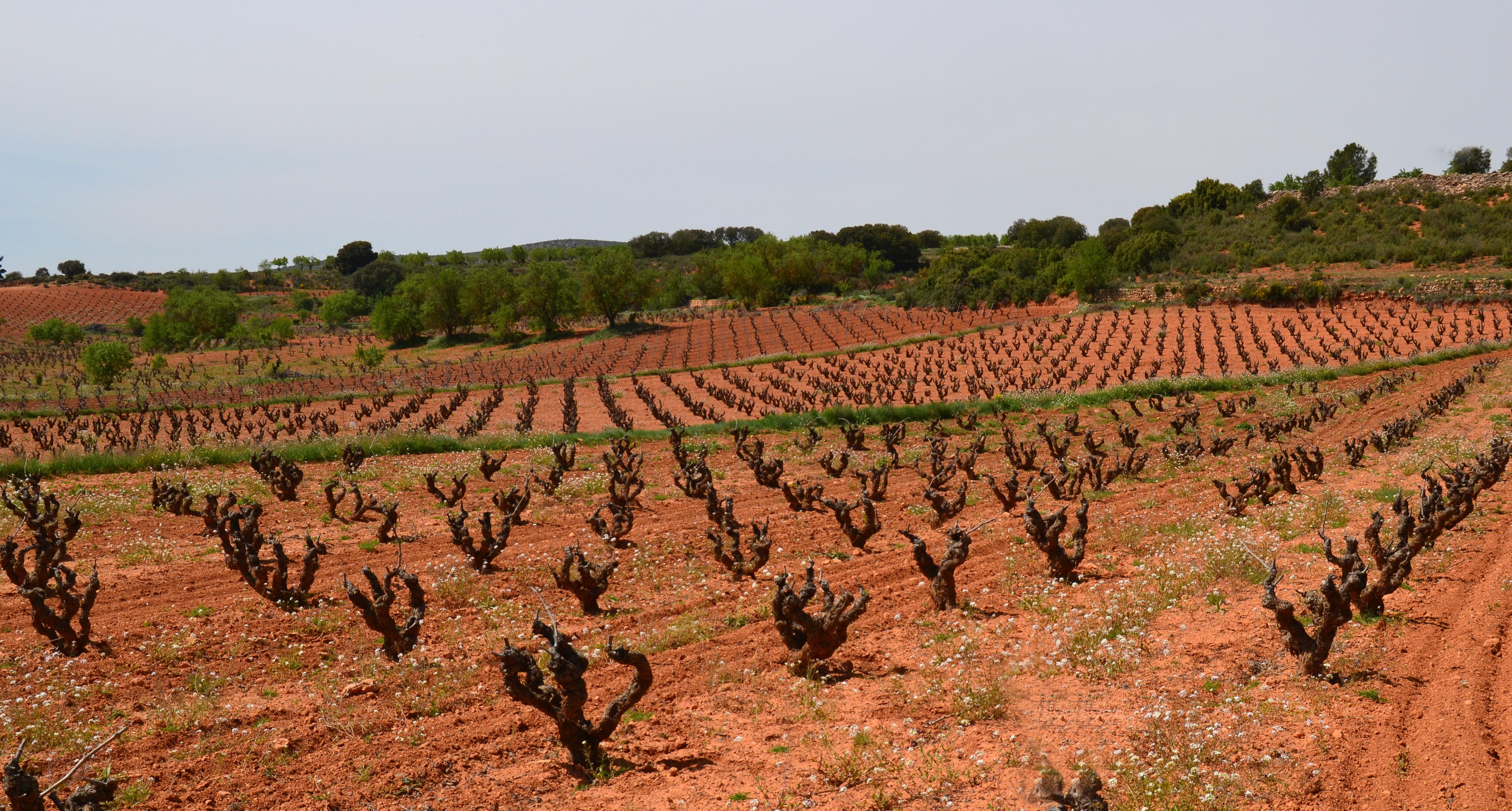 Región vitivinícola