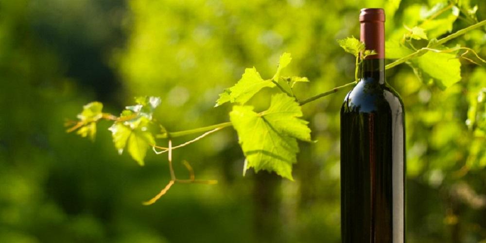 ¿Cuáles son las características de los vinos ecológicos?