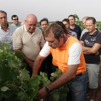 Utiel-Requena celebra la XIX Jornada de Viticultura sobre la polilla y la yesca