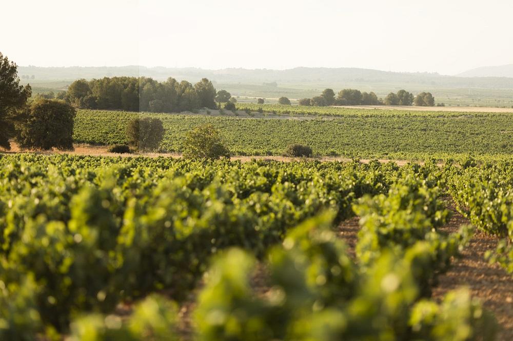 Este jueves la Vuelta a España recorrerá parte de la región vitivinícola de Utiel-Requena
