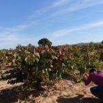 Instameet Igers Valencia en DO Utiel-Requena (08/10/2016) 6