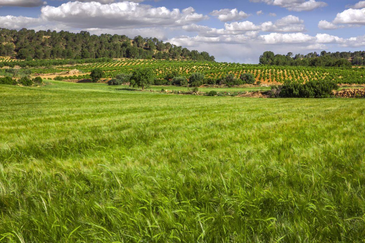 Territorio Bobal impulsa su proyecto a través de una nueva web y dos vídeos promocionales