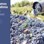 banner-vendimia