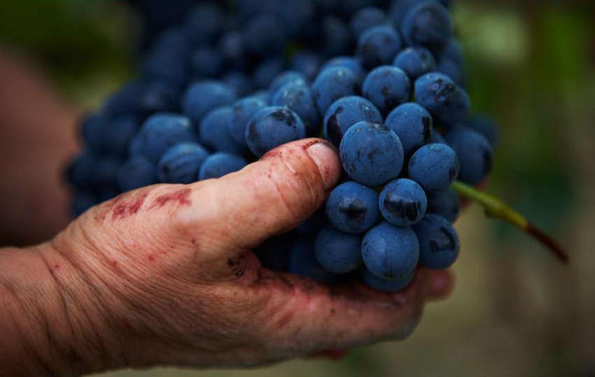 Los taninos: ¿qué son y cómo afectan al sabor del vino?