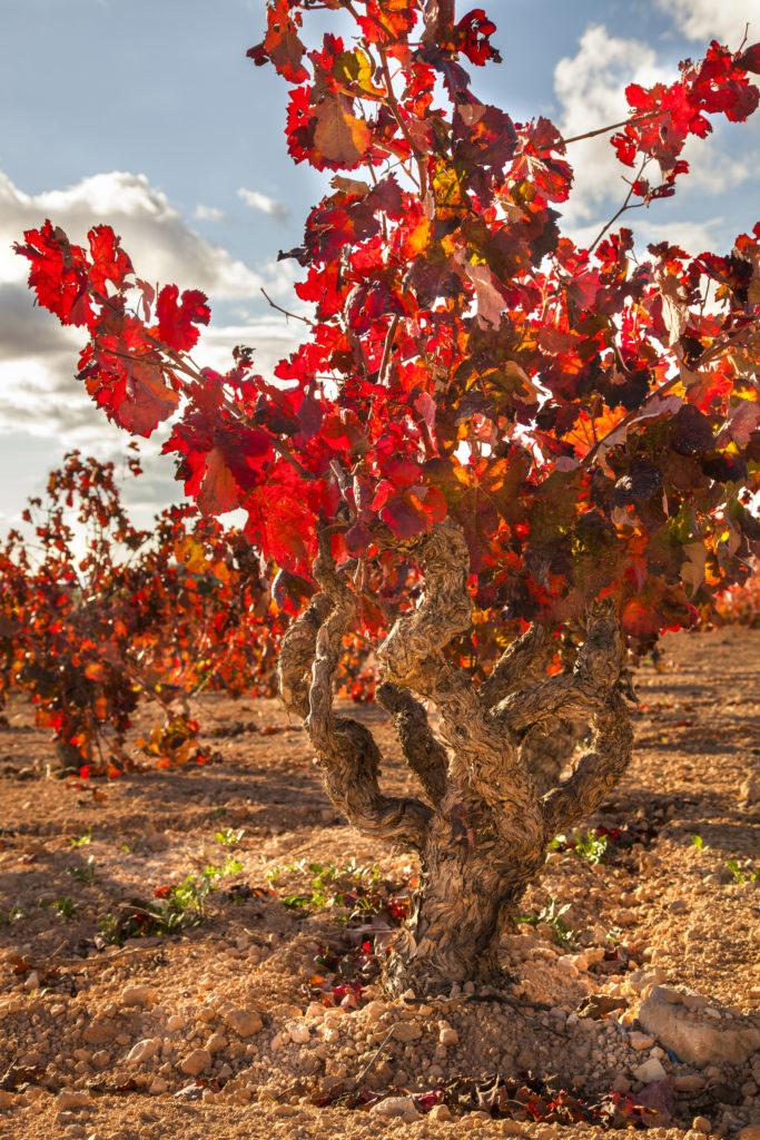 La arqueología del vino en el Territorio Bobal DO Utiel-Requena consolida su candidatura a Patrimonio Mundial