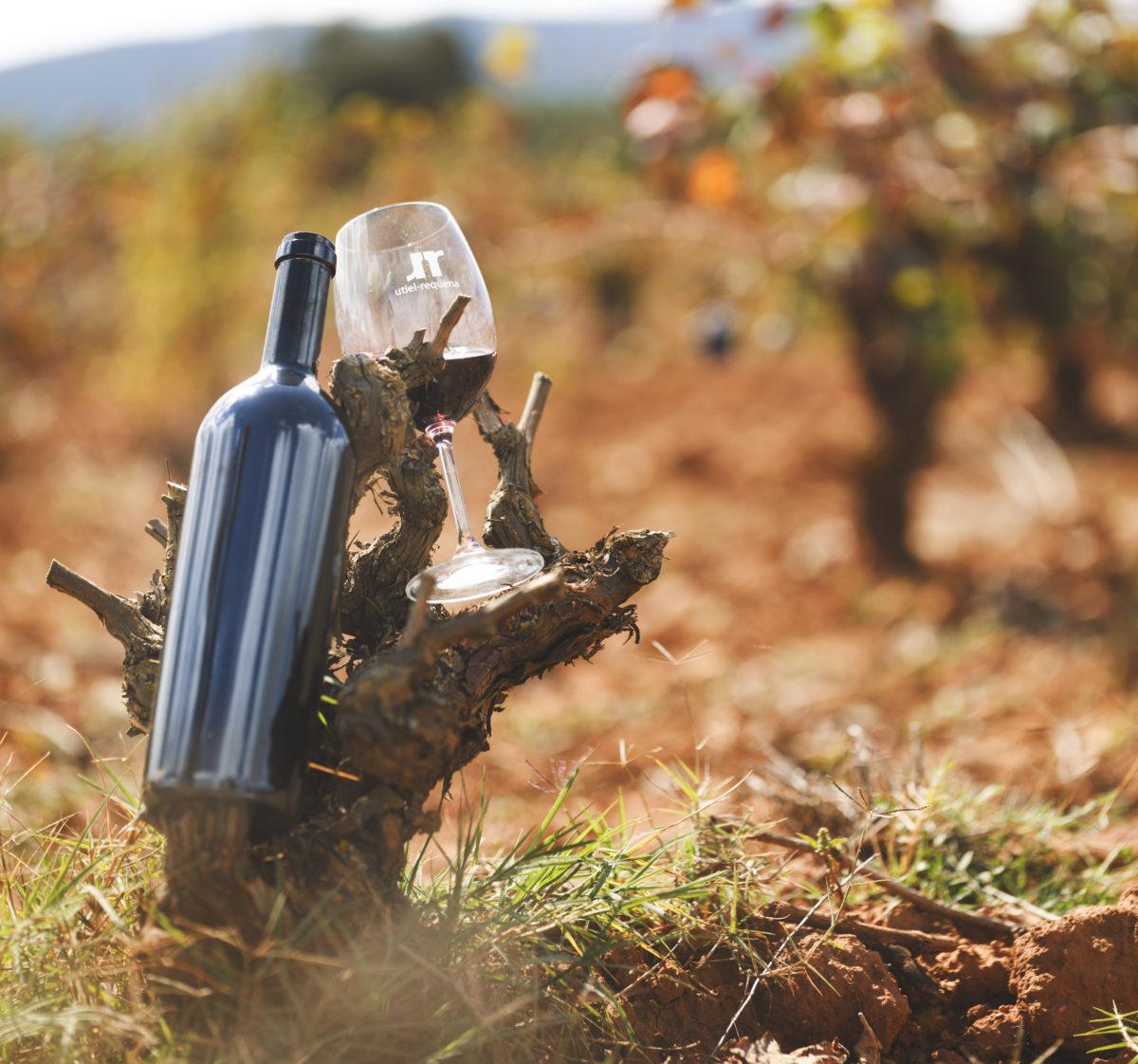 8 beneficios del vino para tu salud