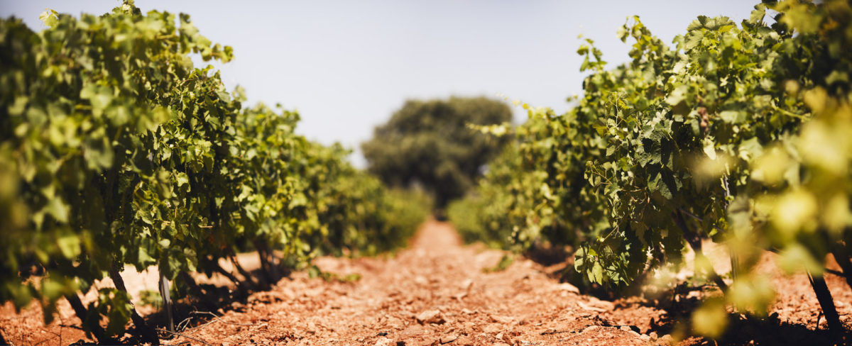 El cambio climático, un desafío de primera magnitud para el sector vitivinícola