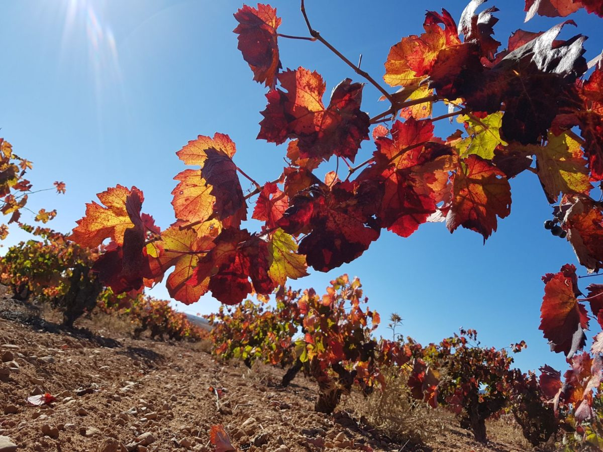 Ruta del Vino D.O. Utiel- Requena, un tesoro enológico a tu alcance