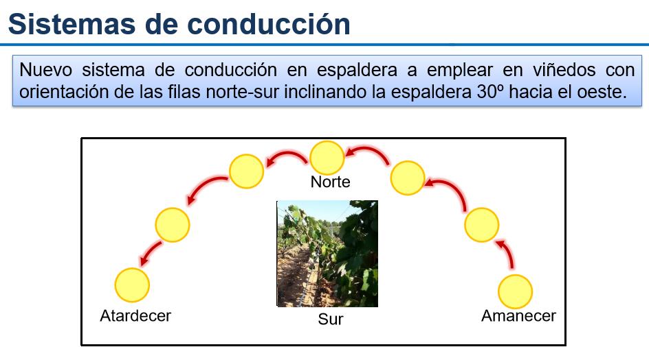 El cambio climático, un desafío de primera magnitud para el sector vitivinícola 1