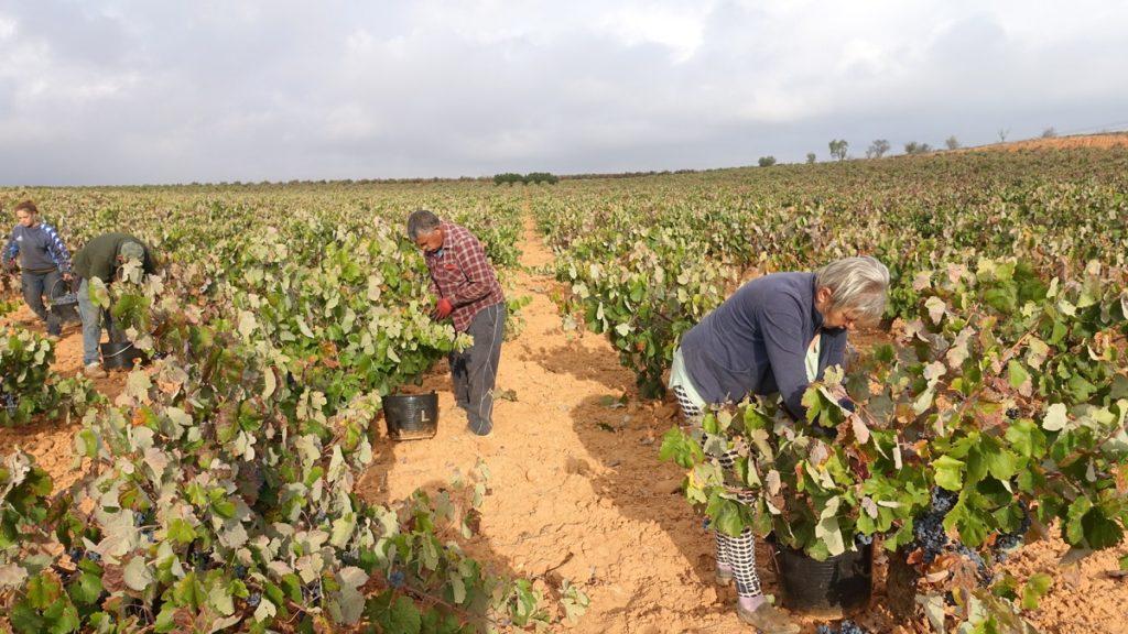 Descubriendo el lenguaje de las tierras del vino 1