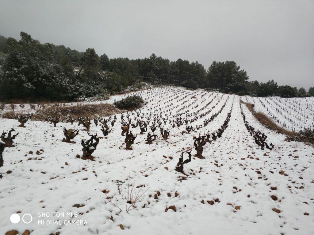 Año de nieves, año de bienes para nuestra comarca Utiel-Requena 0