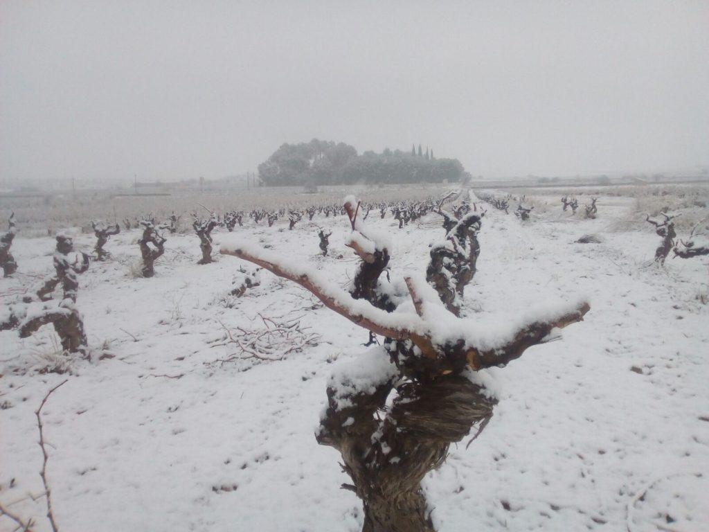 Año de nieves, año de bienes para nuestra comarca Utiel-Requena 1