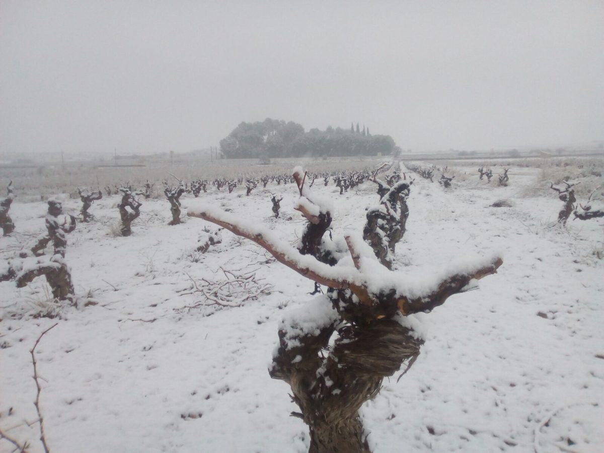 Año de nieves, año de bienes para nuestra comarca Utiel-Requena