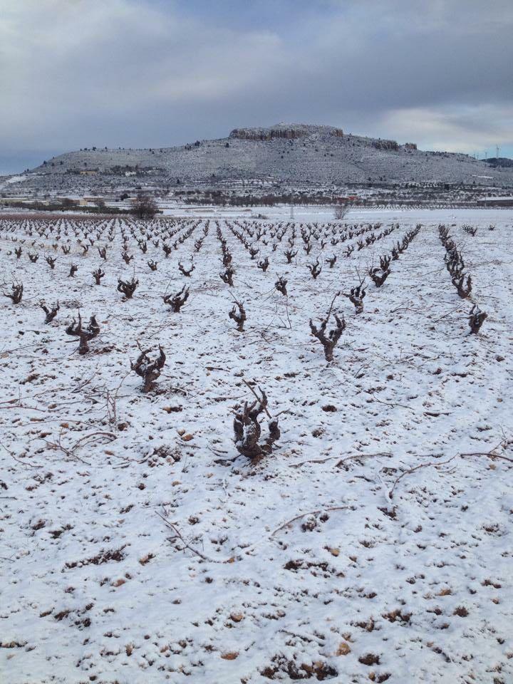 Año de nieves, año de bienes para nuestra comarca Utiel-Requena 2