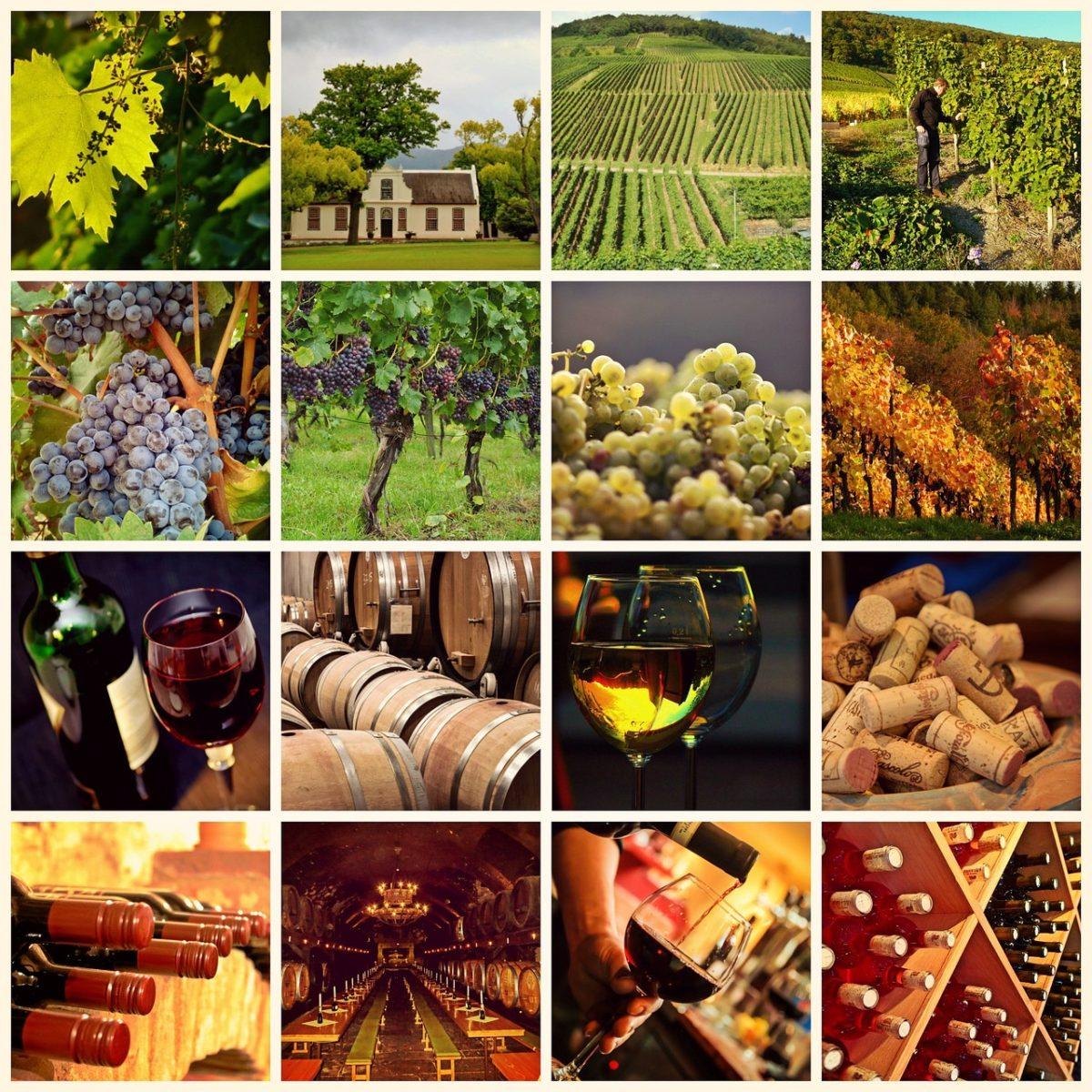 Cinco motivos para exportar vino