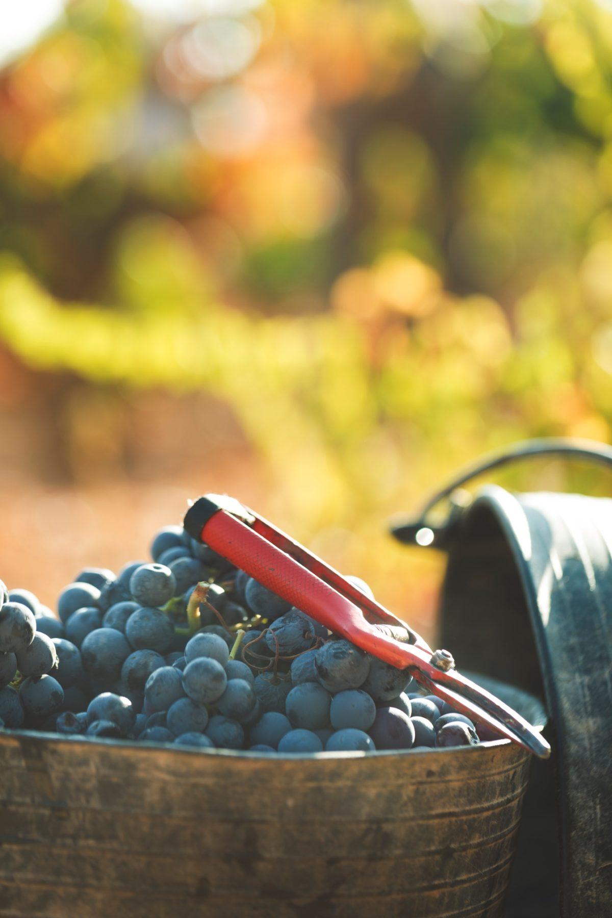 Algunas curiosidades del vino que te sorprenderán