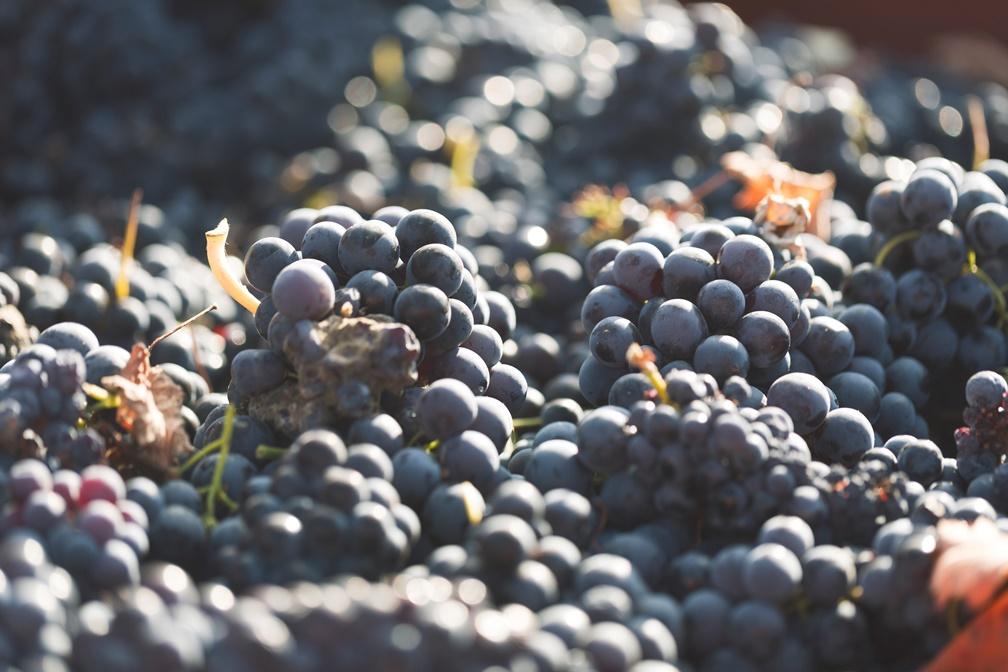 Clasificación de los vinos de la DOP Utiel-Requena según su crianza 1