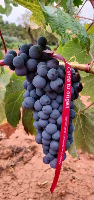 El vino de Utiel-Requena, producto sostenible y de proximidad de la Comunidad Valenciana
