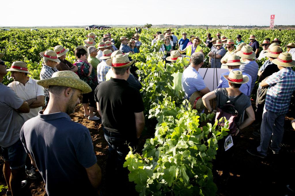 Utiel-Requena celebra una jornada sobre viticultura de precisión y biodiversidad