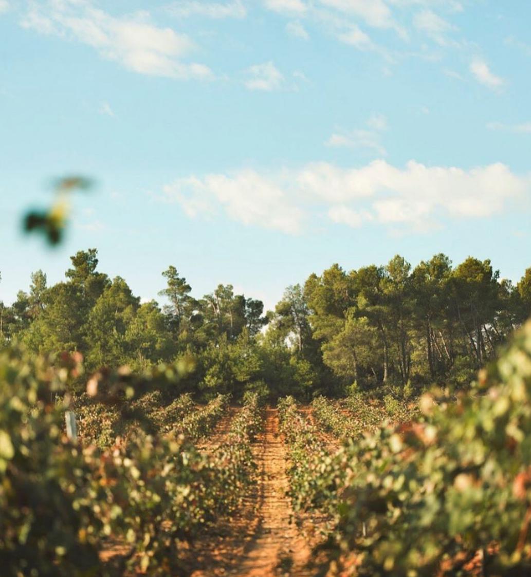 El 100% de los visitantes de la Ruta del Vino  Utiel-Requena la recomiendan