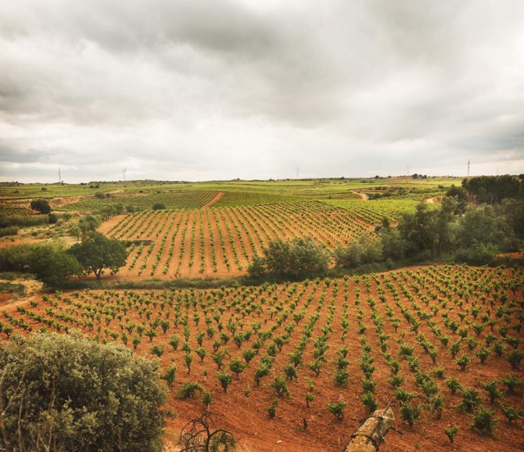 La revista Decanter destaca la DO Utiel-Requena y sus vinos en su número de marzo 1