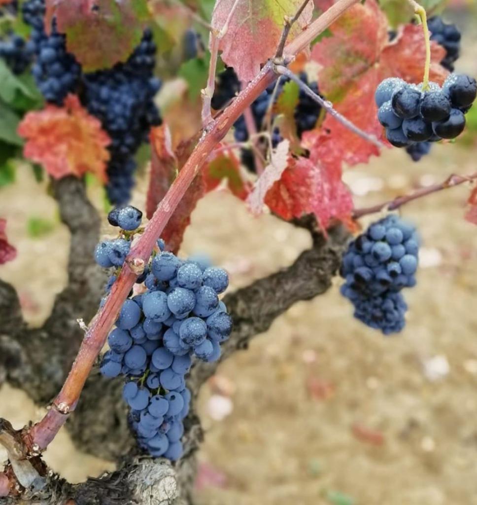 Conoce las partes de la uva y como afectan en la elaboración del vino 0