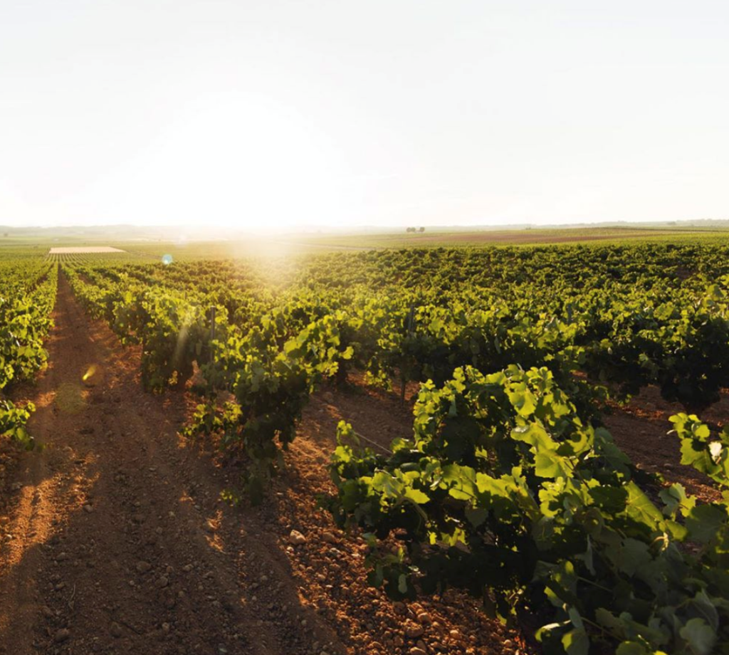 ¿Qué son los vinos del nuevo mundo? 0