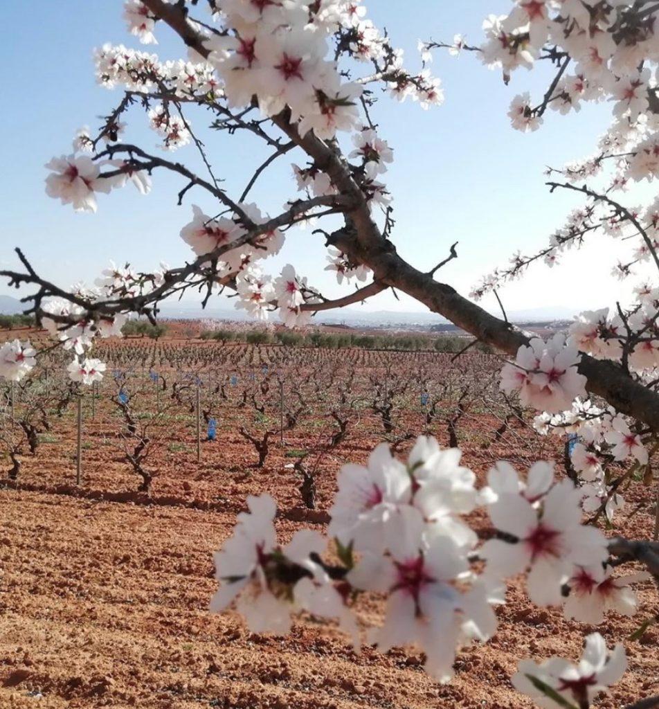 ¿Sabes cómo la naturaleza afecta al vino? 0