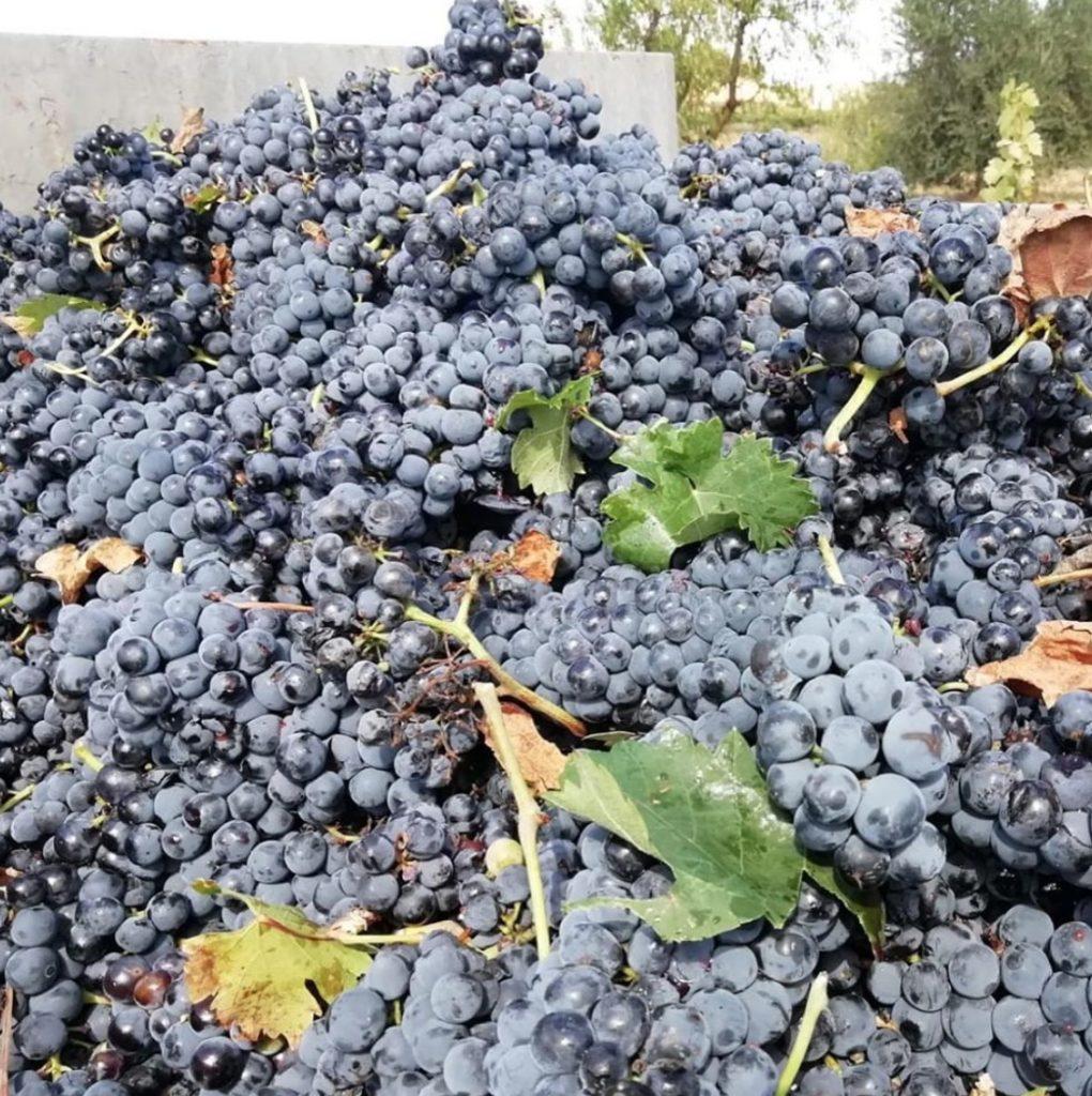 La historia de la uva 0