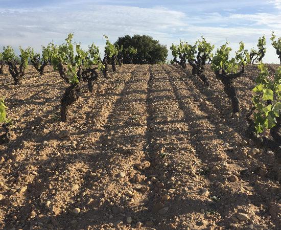 Bodega D.O. UtielRequena - Viticultores de SanJuan – Valsangiacomo