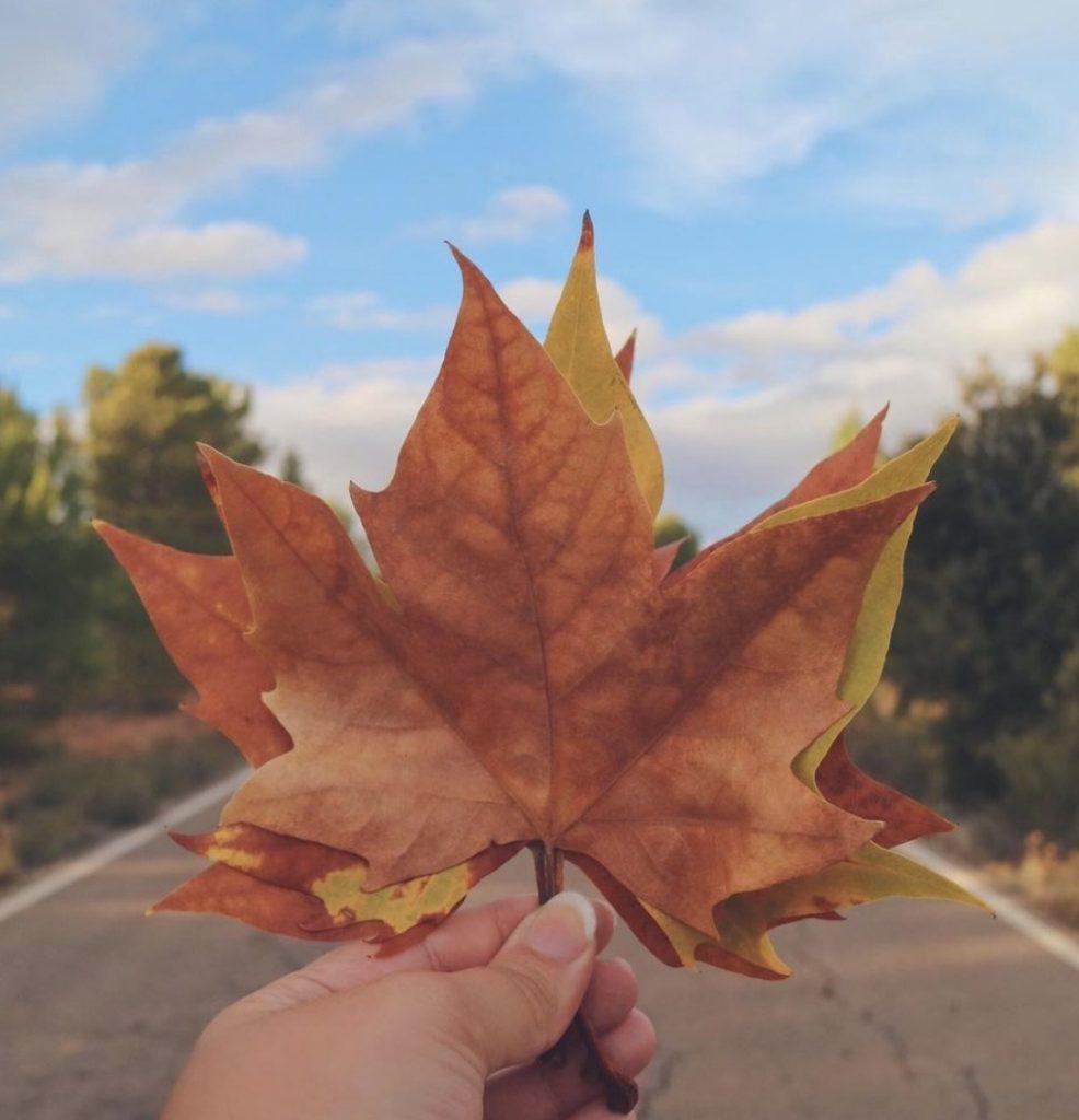 Enoturismo también en otoño 0