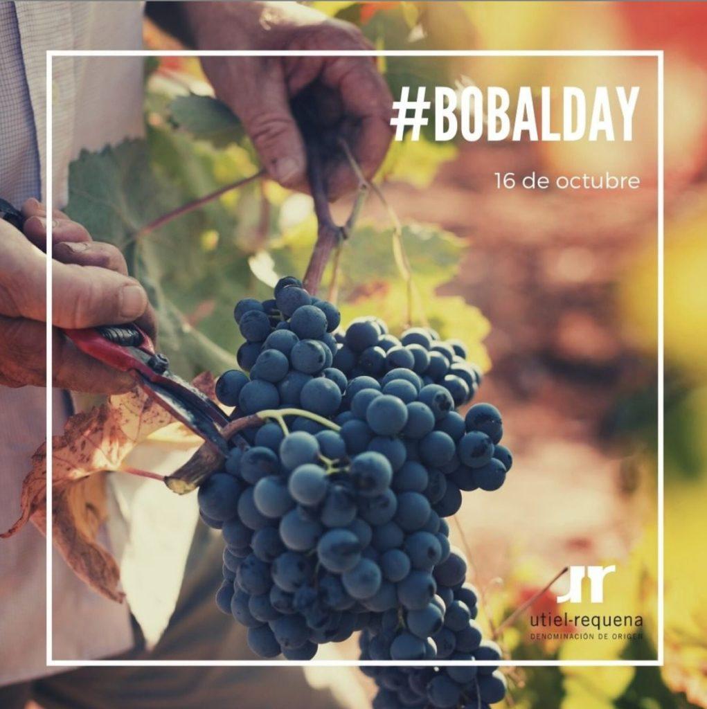 ¡La Bobal también tiene su día! 0