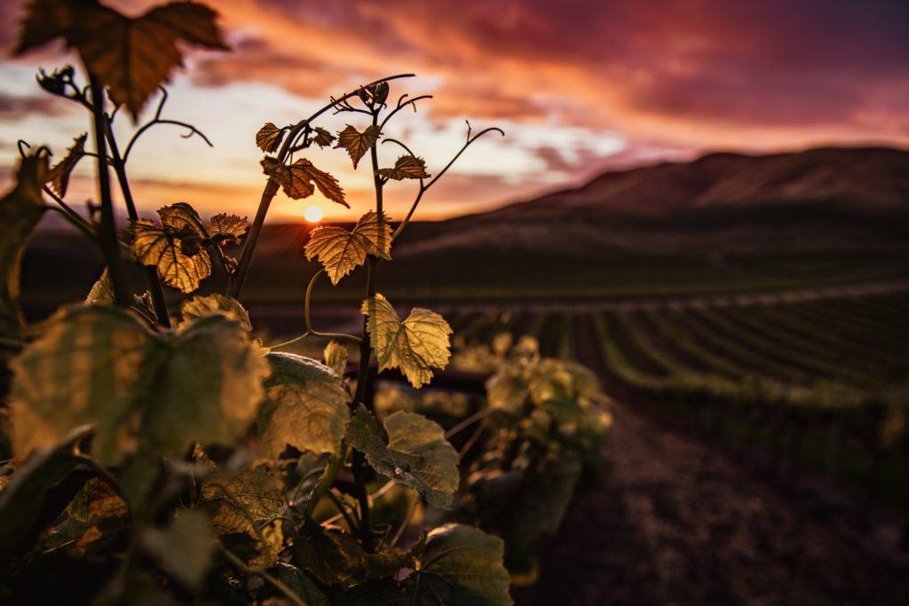 ¿Cómo influye la altura del viñedo en la calidad de la uva y en el vino? 0