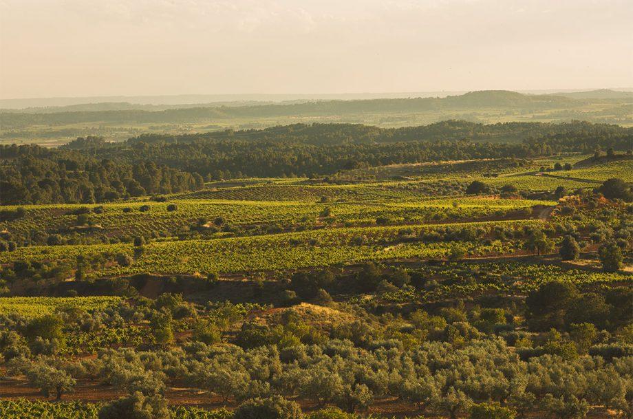 Decanter cuenta el crecimiento exponencial de la viticultura ecológica de la Denominación de Origen Utiel-Requena 0