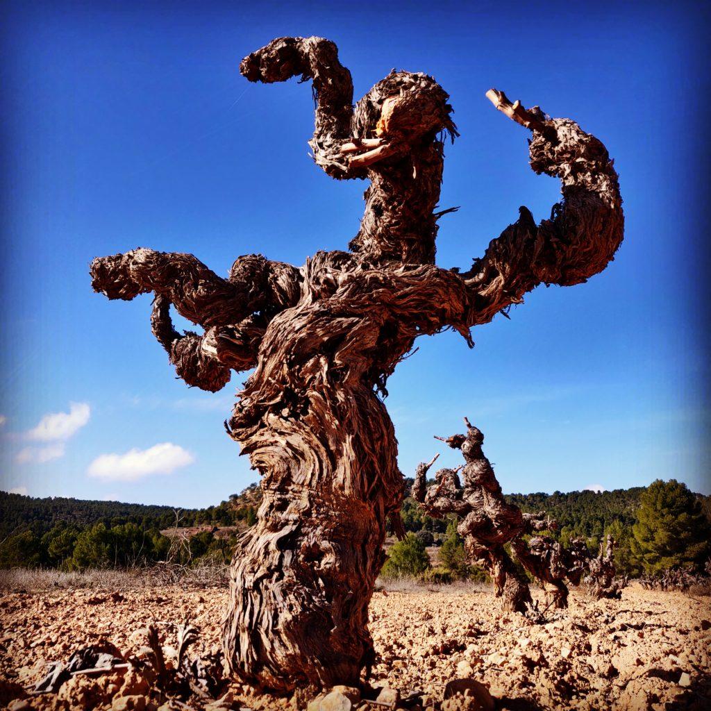 Decanter se hace eco del proyecto para revalorizar los vinos de uva Bobal de Utiel-Requena 0